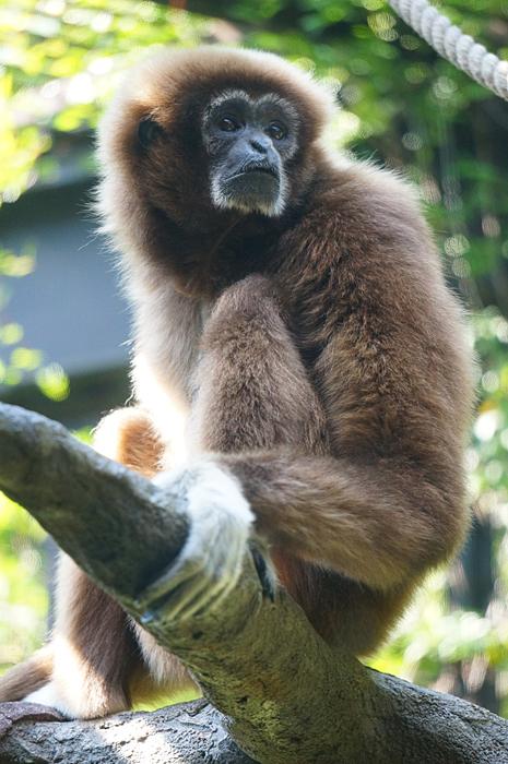 上野動物園 サル