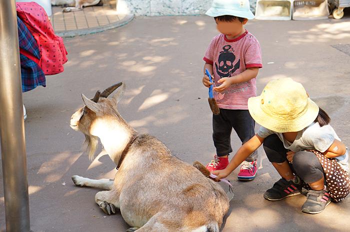 上野動物園 ヤギ