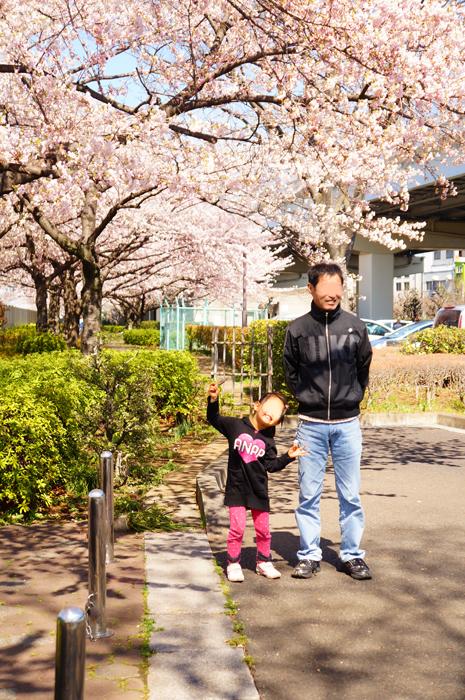都市農業公園 桜
