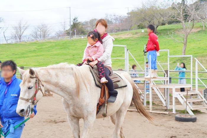 マザー牧場 乗馬