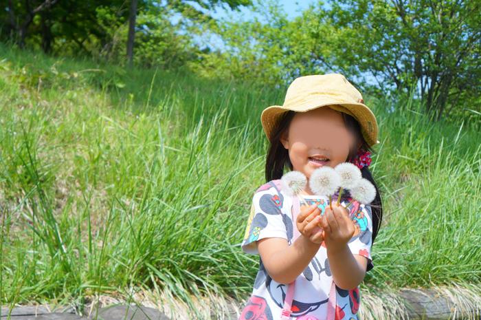 昭和記念公園 たんぽぽ