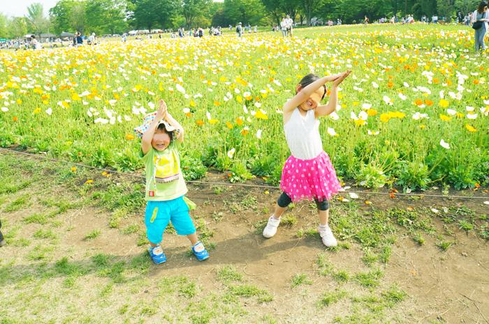 昭和記念公園 ポピー