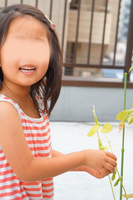 家庭菜園 夏 枝豆