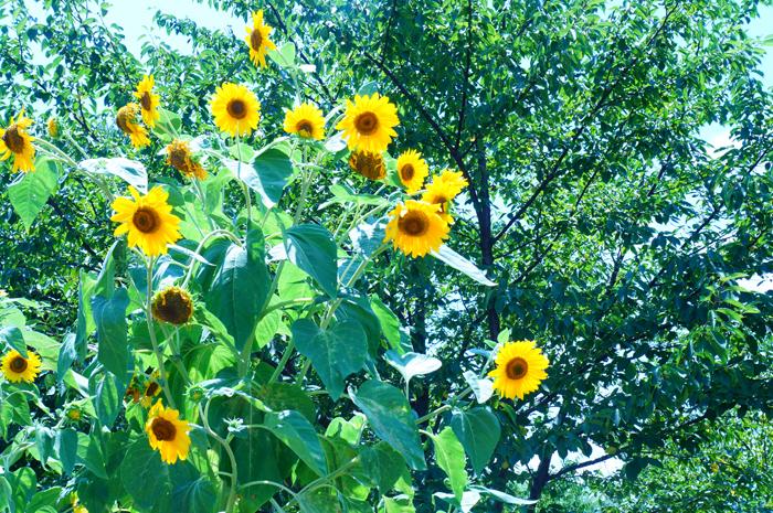 舎人公園 夏