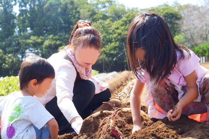 都民の日 成田ゆめ牧場 サツマイモ掘り