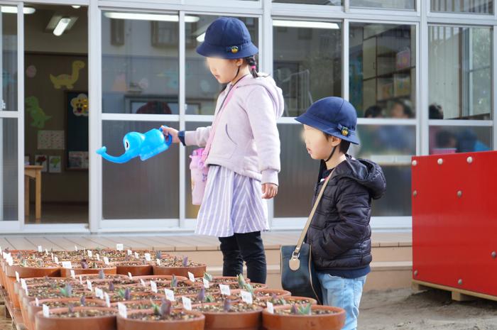 卒園 チューリップ 幼稚園