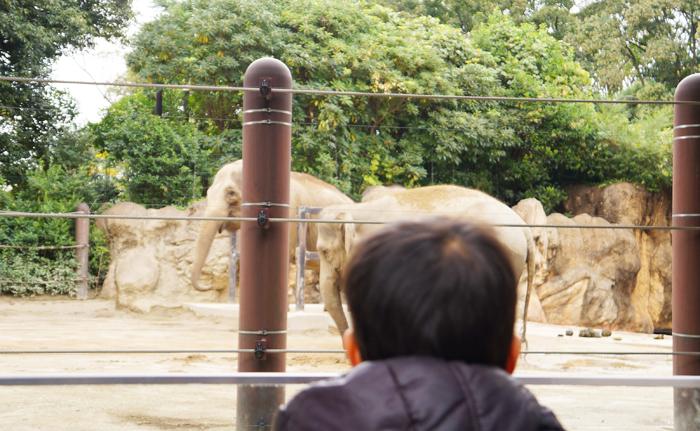 動物園 長男