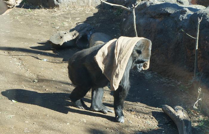 上野動物園 ごりら