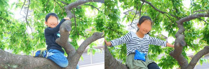 木登り なーちゃん かーくん